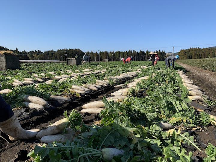 【北海道で農業!】雄大な自然、綺麗なシェアハウスのある環境で働きませんか?
