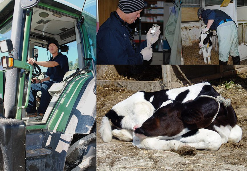 【北海道の最北】大自然に囲まれながら農業や酪農のお仕事ができます!